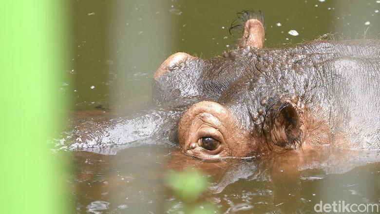 Taman Satwa Taru Jurug atau Solo Zoo