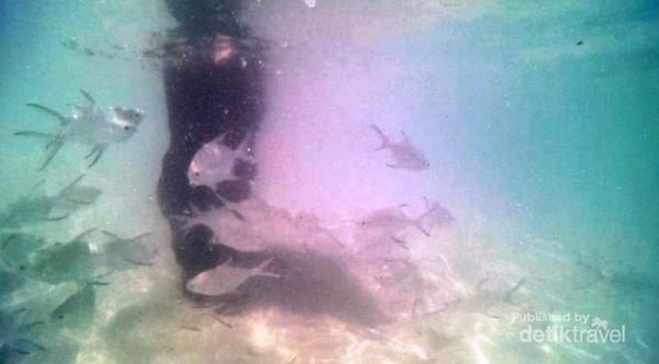 Ikan-ikan di Gili Nangu sudah menyerbu bahkan saat kaki baru saja masukke air