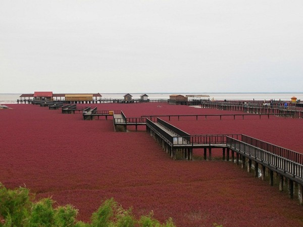 Pantai Merah (amusingplanet.com)