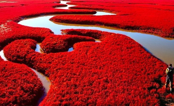 Pantai Merah (sumber: skybambi.wordpress.com)