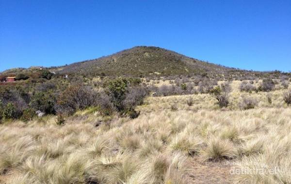 Indahnya Gunung Lawu dihiasi oleh rerumputan yang mengering.