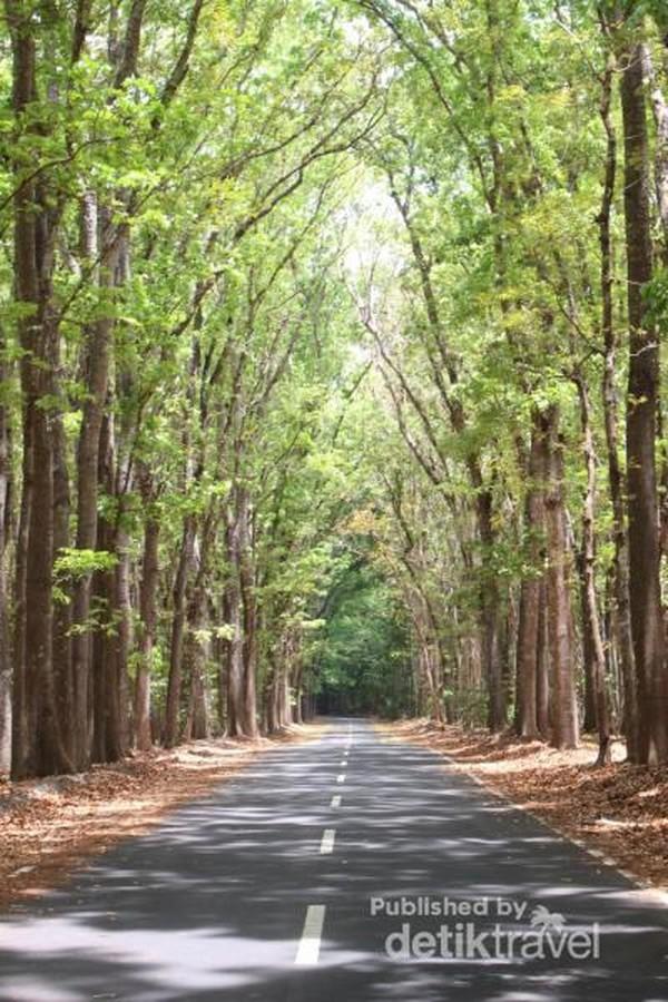 Pepohonan lebat yang ada di sekitar TN Alas Purwo