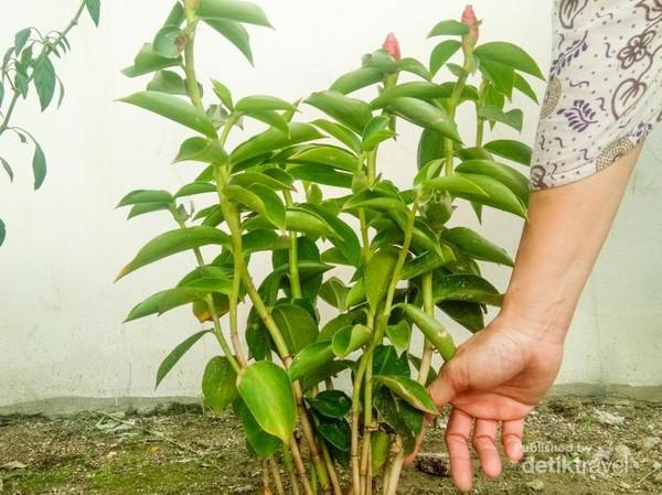 Menanaman tanaman.Foto: Indah Evania Putri