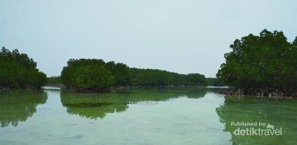Hutan bakau yang tenang, manunggu kami datang