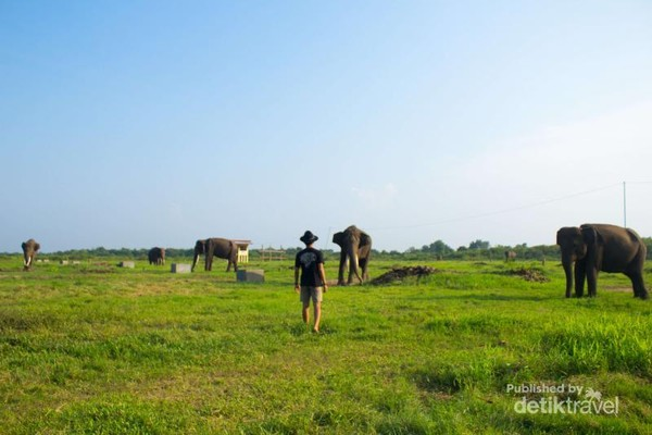 Bertemu gajah