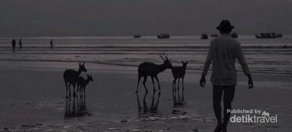 Melewati senja bersama kawanan rusa di pesisir Pantai Pangandaran