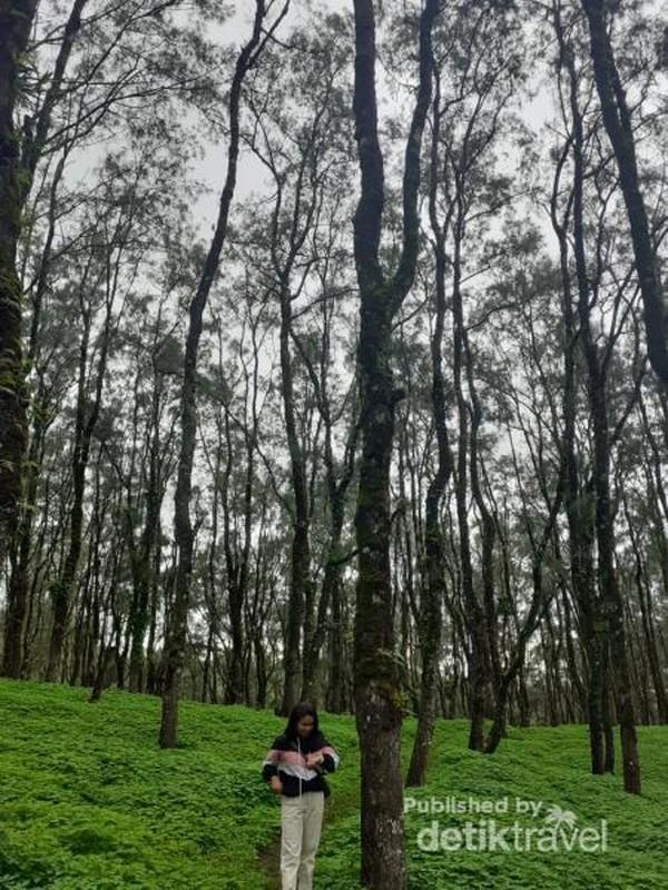 Cagar Alam Mutis ini didominasi oleh pohon Ampupu (Eucaliptus Urophylla).