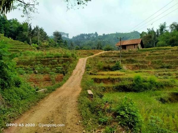 Area wisata sawah umum Desa Gunung Jampang.