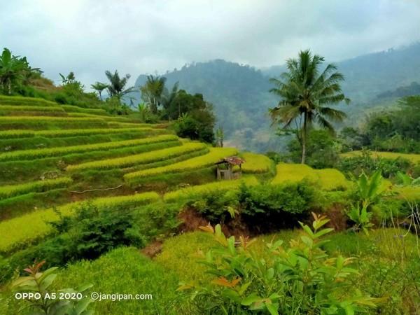 Kawasan sawah cinta resmi Gunung Jampang.