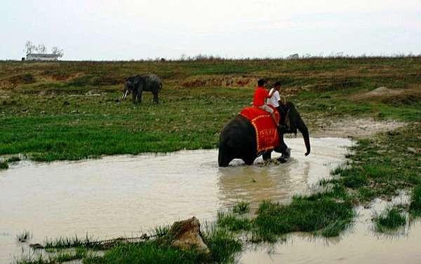 Menjelajahi Way Kambas bersama gajah (Abner Krey/ACI)