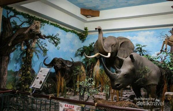 The African Big Five yang terdiri dari Gajah, Badak Putih, Banteng, Singa dan Macan Tutul. Koleksi African Big Five ini merupakan pajangan yang sangat mengesankan.