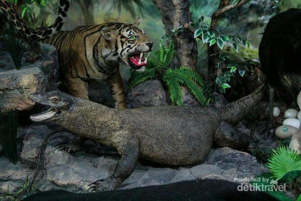 Komodo dan harimau yang terdapat pada Indonesian Species Room. Ada sekitar 98 hewan dari Indonesia di ruang pamer ini.