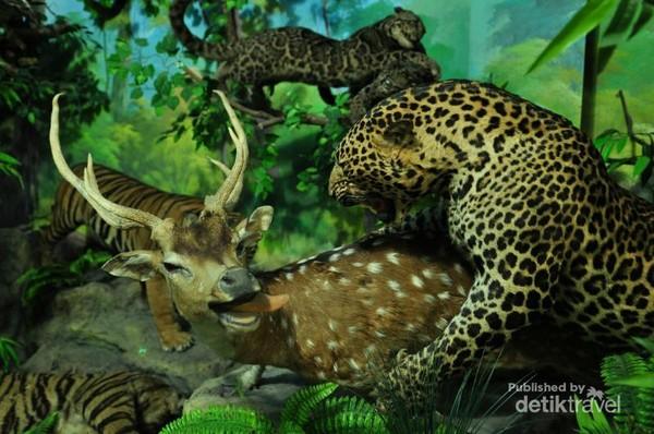 Hewan-hewan yang diawetkan ditata dengan sangat artistik.