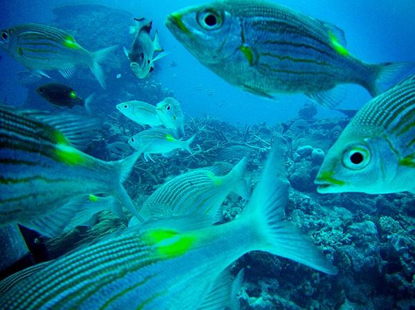 Keindahan bawah laut Hateruma (wayfaring.info)