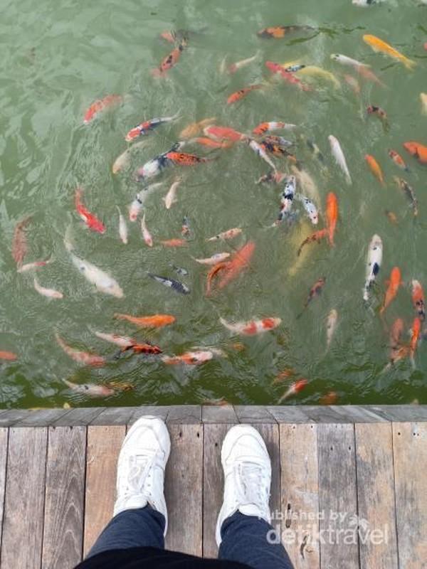 main bersama ikan di kolam trembesi
