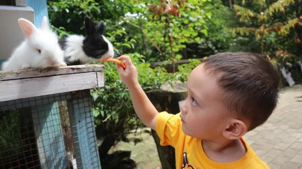 Tidak hanya wisata alam, di Maribaya Hotspring Resort juga menyediakan arena bermain bersama kelinci