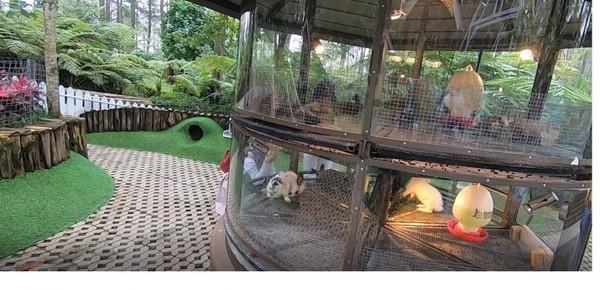 Rabbit forest yang ada di kawasan Orchid Forest Cikole