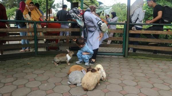 Walau terkenal dengan rumah Hobbit, kita bisa bermain bersama kelinci di Farm House