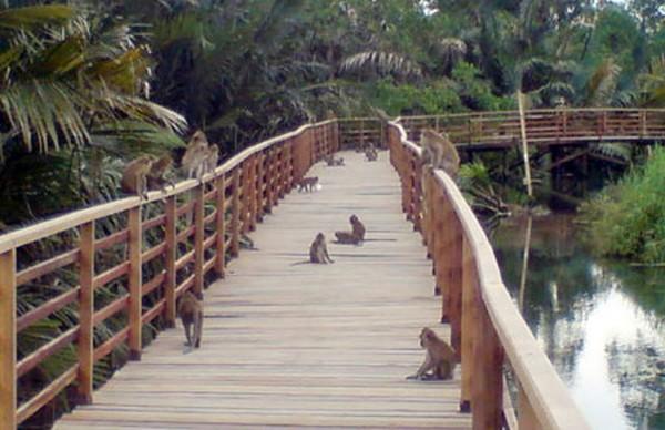 Kawanan monyet ekor panjang (Ramadhian Fadhillah/ detikFoto)