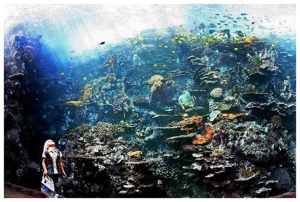 Area terumbu karang (reefkeeping.com)