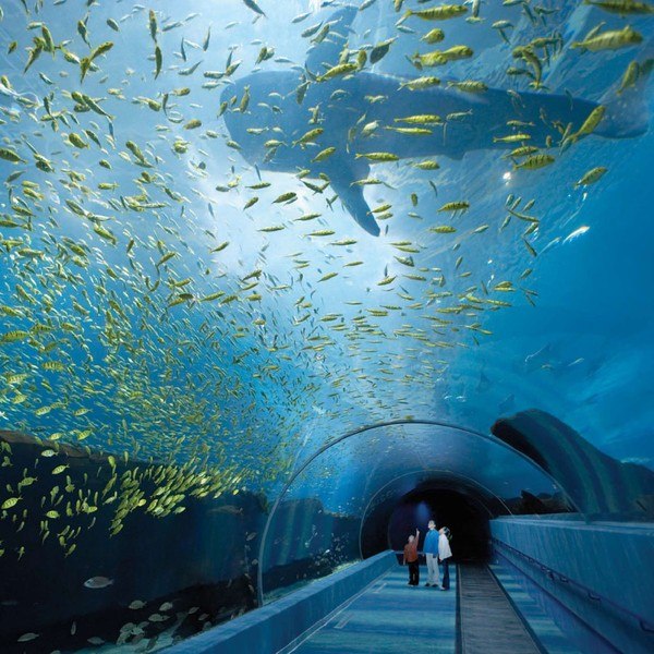 Terowongan (scholasticablog.com)