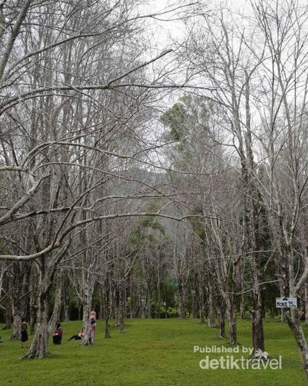 Lokasi asal mula cengkeh afo, Kebun Cengkeh Gambesi