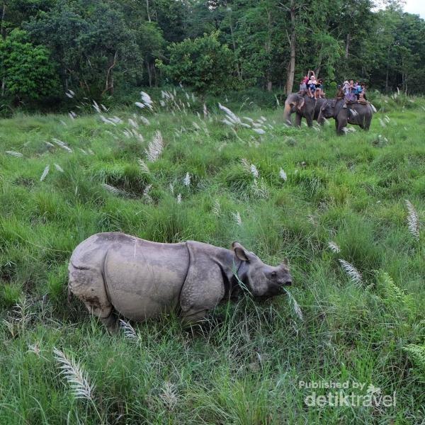 Menunggang gajah untuk melihat badak di alamnya