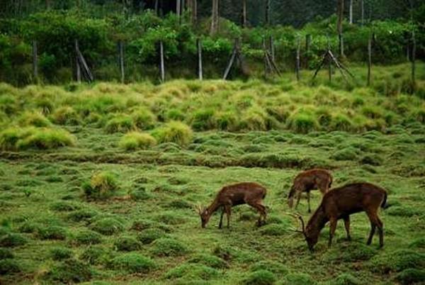 Menjelajah penangkaran rusa di Ranca Upas (P.D. Indriastuty Pharmantara/dTraveler)