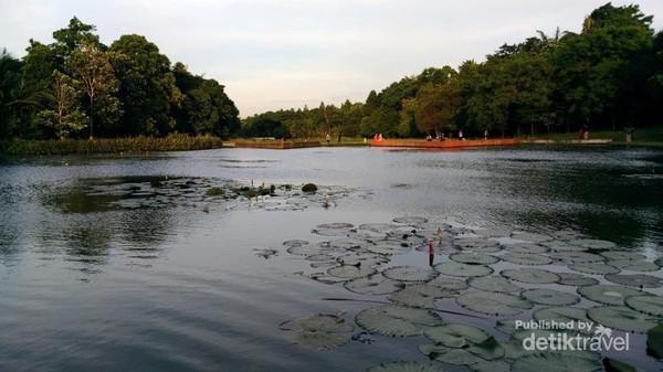 Danau Dora LIPI Cibinong