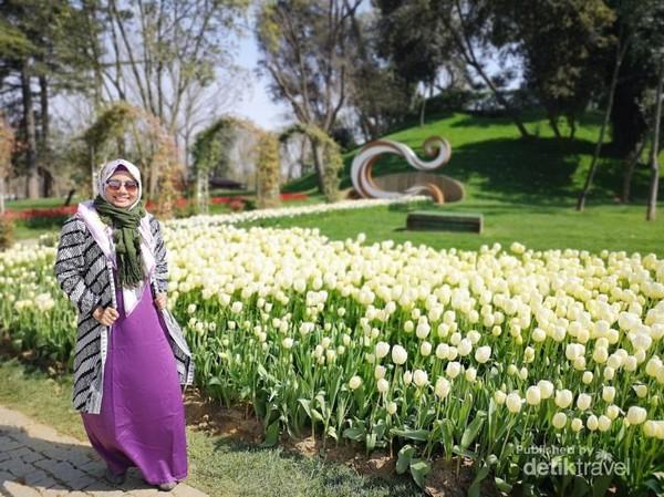 Tulip putih bermekaran di Emirgan Park