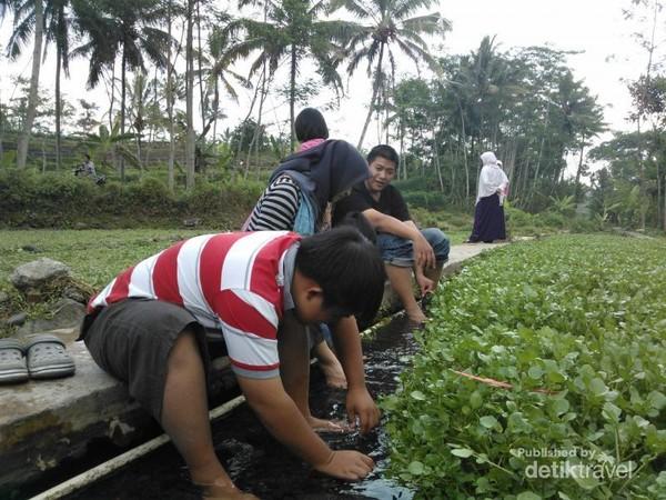 Mmata air nggedad Desa Citrosono