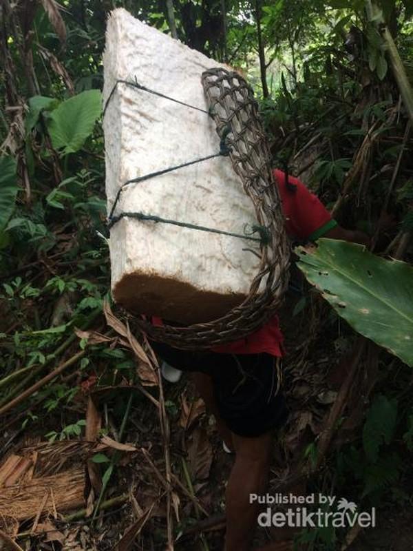 Pencari Sagu di Siberut