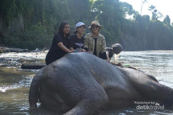 Serunya memandikan gajah di sungai