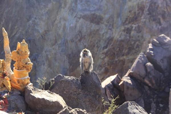monyet di puncak.