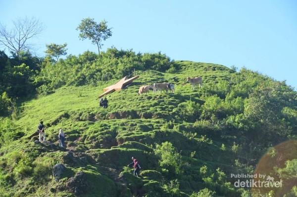 Trek menuju Puncak Bukit Selong.