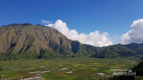 View cantik persawahan warga dari atas Bukit Selong.