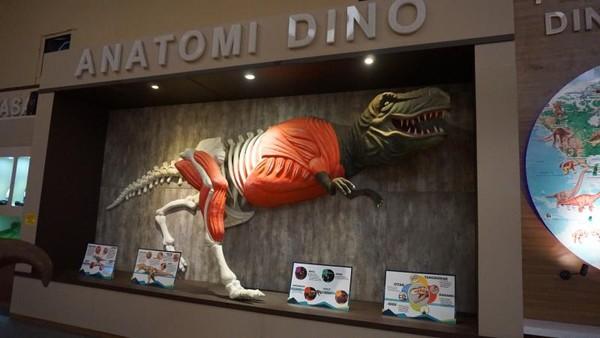 Penjelasan anatomi dari tubuh T-Rex mulai dari otak, mata, gigi dan sebagainya.