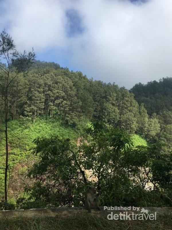 Kekayaan flora dan fauna di Taman Nasional Kelimutu