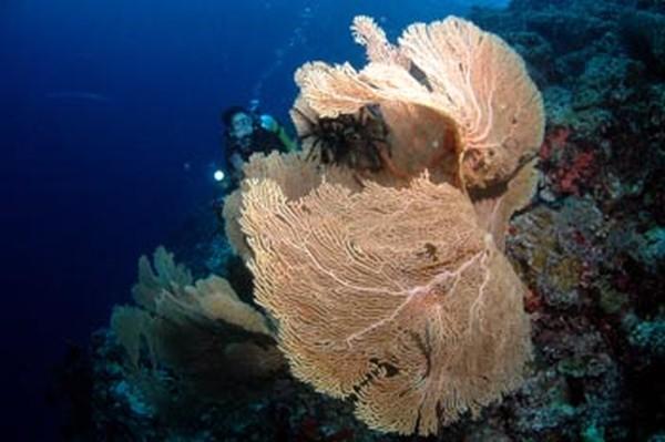 Pulau Owi Kecantikan Tersembunyi Di Timur Biak Papua