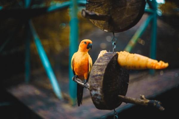 Inilah contoh hewan yang ada di Gembira Loka Zoo Yogyakarta