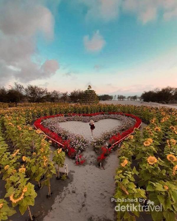 Taman Bunga Di Gumuk Pasir
