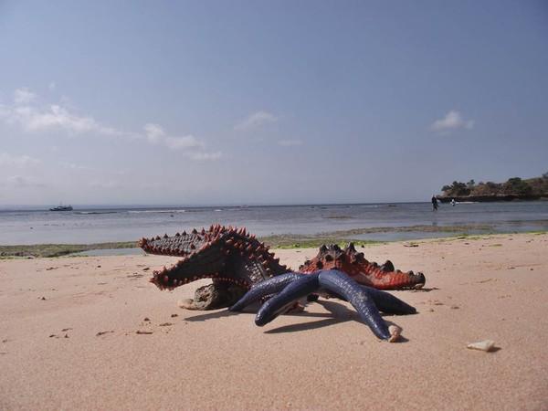Biota laut Pantai Pink (Tangsi)