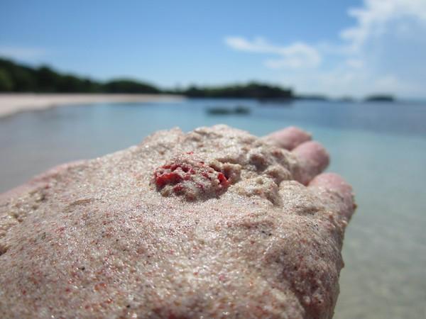 Terumbu karang berwarna merah