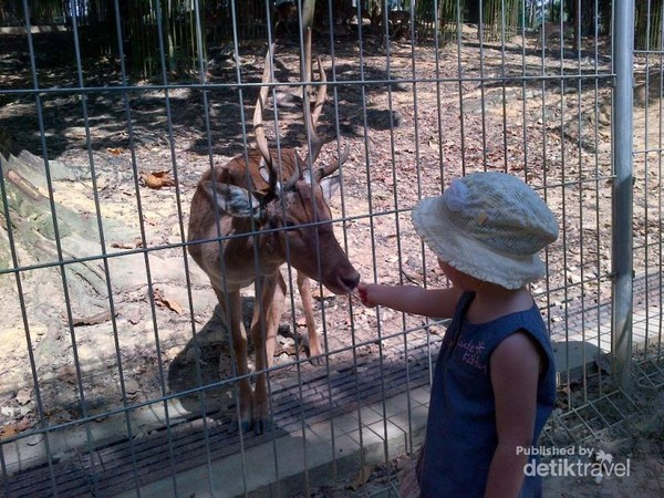 Di Taman Tasik Perdana ini terdapat taman rusa.