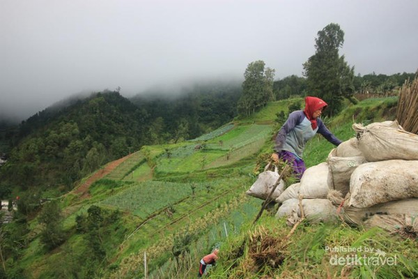 Mata pencaharian masyarakat sekitar dengan mencari rumput