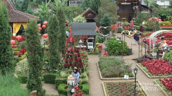 Kebun Begonia yang memiliki berbagai bunga yang indah dan mempesona