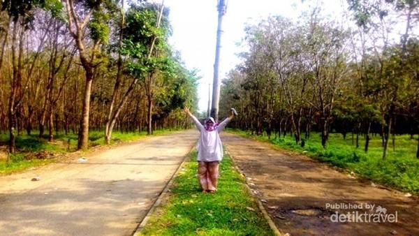 Jalan masuk menuju pantai di kelilingi hutan pohon karet.