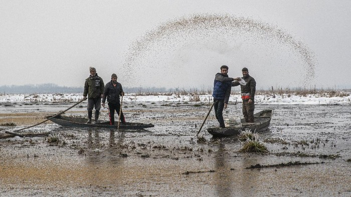 Migratory birds fly above the frozen waters of a wetland in Hokersar, north of Srinagar, Indian controlled Kashmir, Friday, Jan. 22, 2021. Wildlife officials have been feeding birds to prevent their starvation as weather conditions in the Himalayan region have deteriorated and hardships increased following two heavy spells of snowfall since December. Temperatures have plummeted up to minus 10-degree Celsius (14 degrees Fahrenheit). (AP Photo/Dar Yasin)