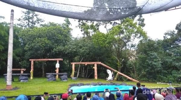 Harimau putih yang melompat menangkap makanan yang dilemparkan ke arah kolam