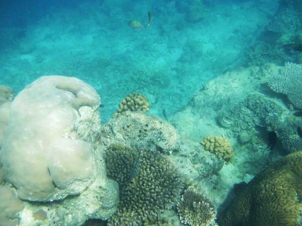 Terumbu karang di Pulau Tidung